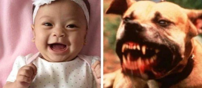 Mãe vai ao banheiro e bebê é morta por pitbull 'carinhoso'