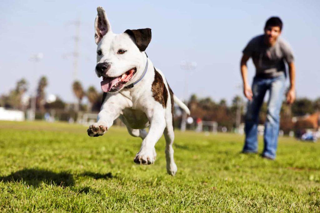 MARANHÃO – Governo cria multa de R$ 600 para quem andar com cães sem coleira
