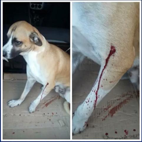 Caxias/MA –  Domingos Costa ameaça José Reinaldo de morte e atira no cachorro