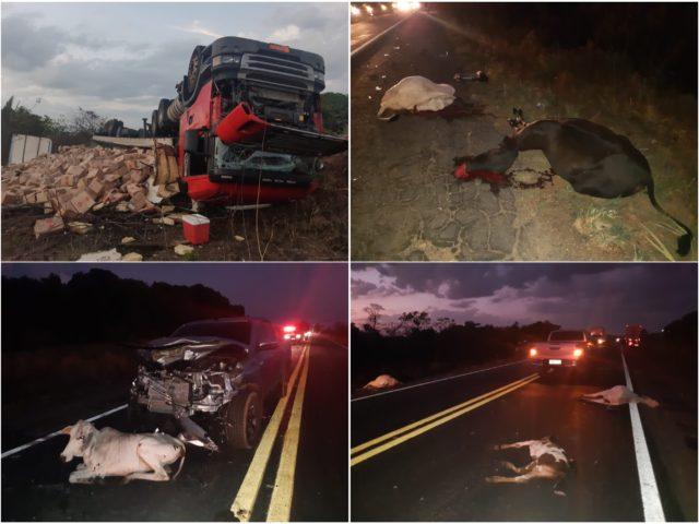 Bacabeira/MA – Animais na pista provocam dois acidentes na BR-135/MA